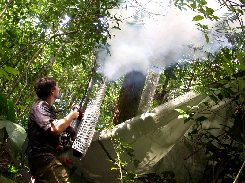 Image Result For Insect Spray